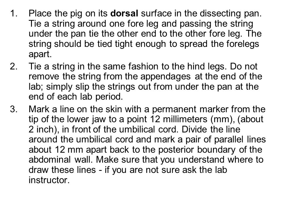 Place the pig on its dorsal surface in the dissecting pan