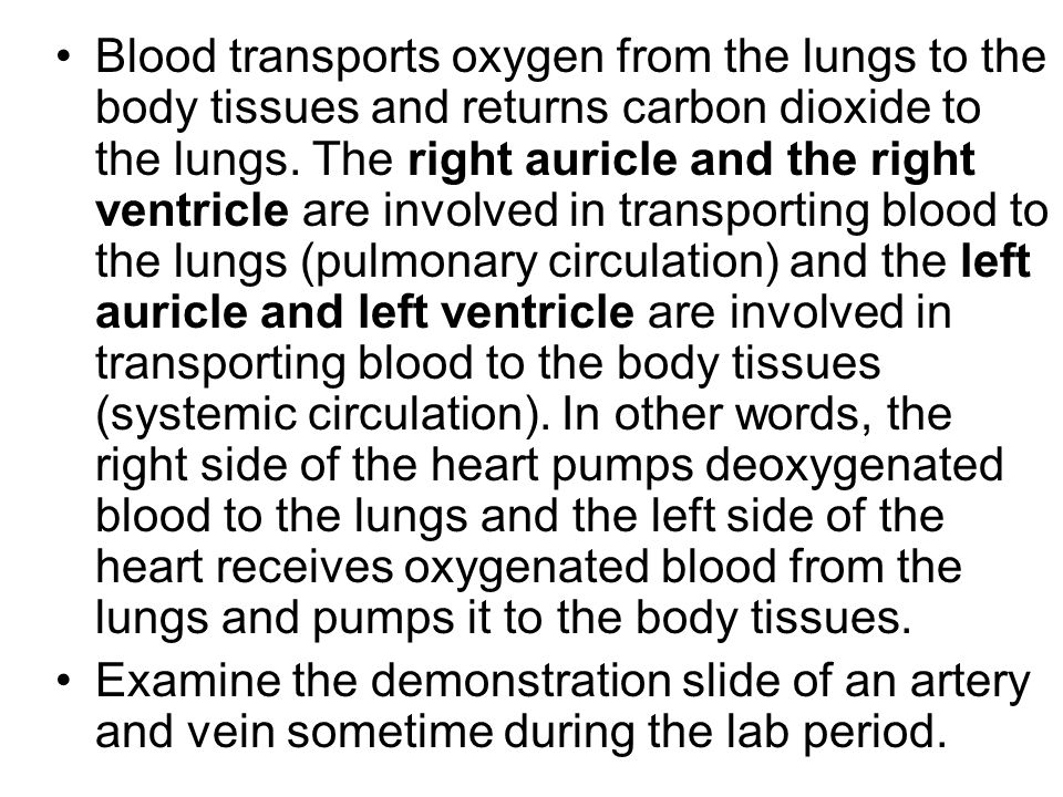 Blood transports oxygen from the lungs to the body tissues and returns carbon dioxide to the lungs. The right auricle and the right ventricle are involved in transporting blood to the lungs (pulmonary circulation) and the left auricle and left ventricle are involved in transporting blood to the body tissues (systemic circulation). In other words, the right side of the heart pumps deoxygenated blood to the lungs and the left side of the heart receives oxygenated blood from the lungs and pumps it to the body tissues.