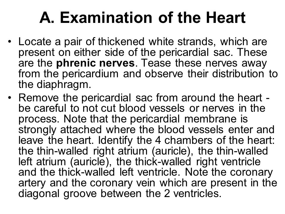 A. Examination of the Heart