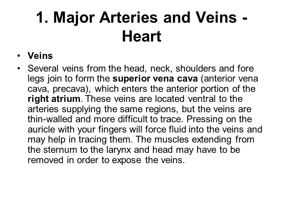 1. Major Arteries and Veins -Heart