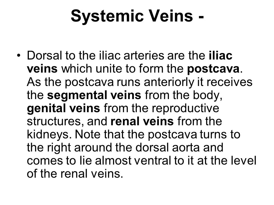 Systemic Veins -
