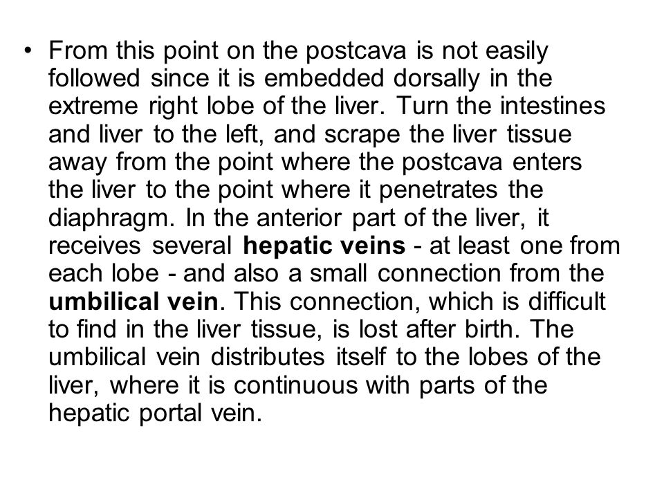 From this point on the postcava is not easily followed since it is embedded dorsally in the extreme right lobe of the liver.