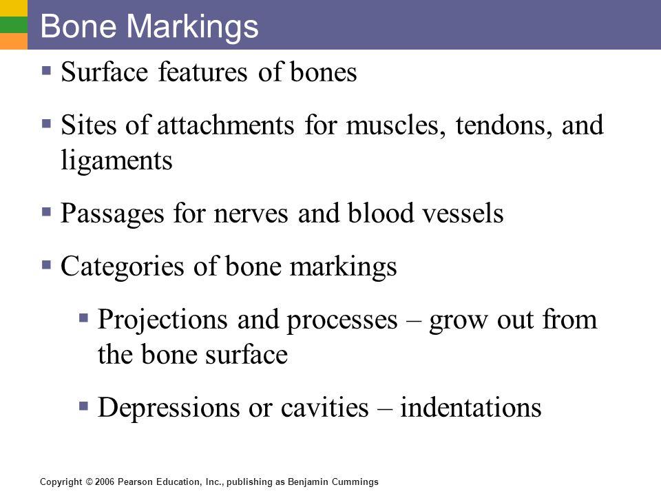Bone Markings Surface features of bones