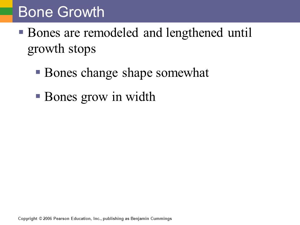 Bone Growth Bones are remodeled and lengthened until growth stops