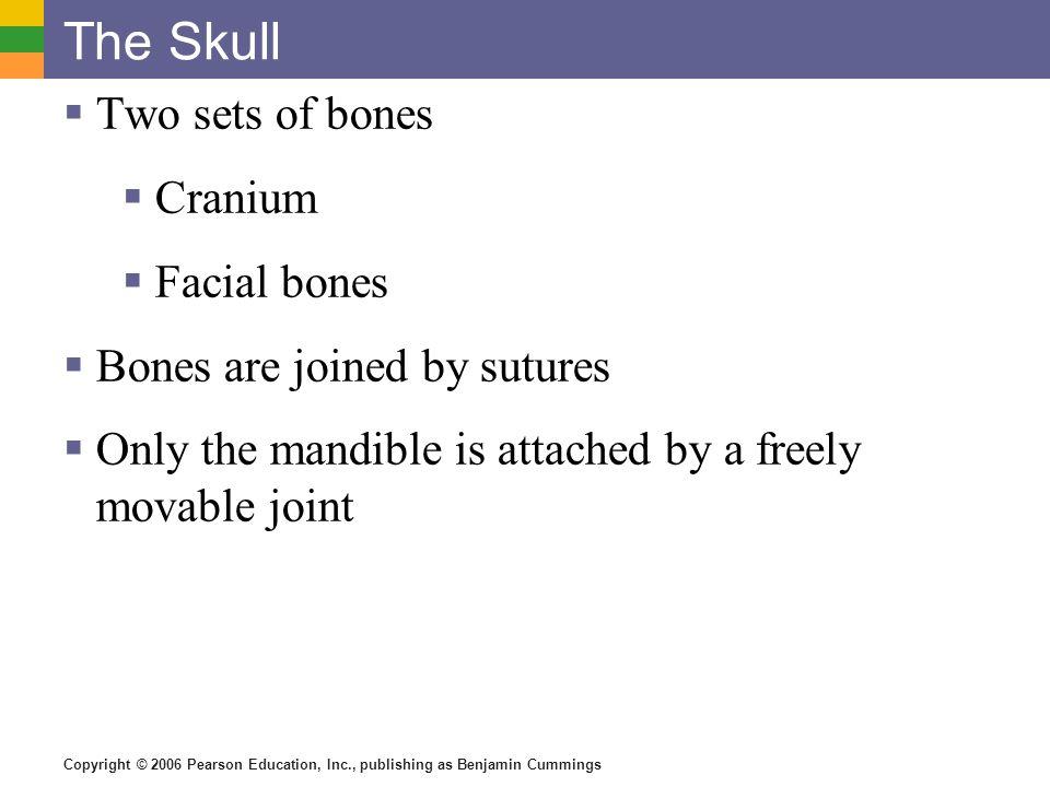 The Skull Two sets of bones Cranium Facial bones