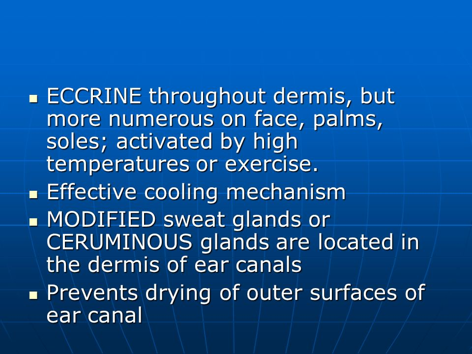 ECCRINE throughout dermis, but more numerous on face, palms, soles; activated by high temperatures or exercise.