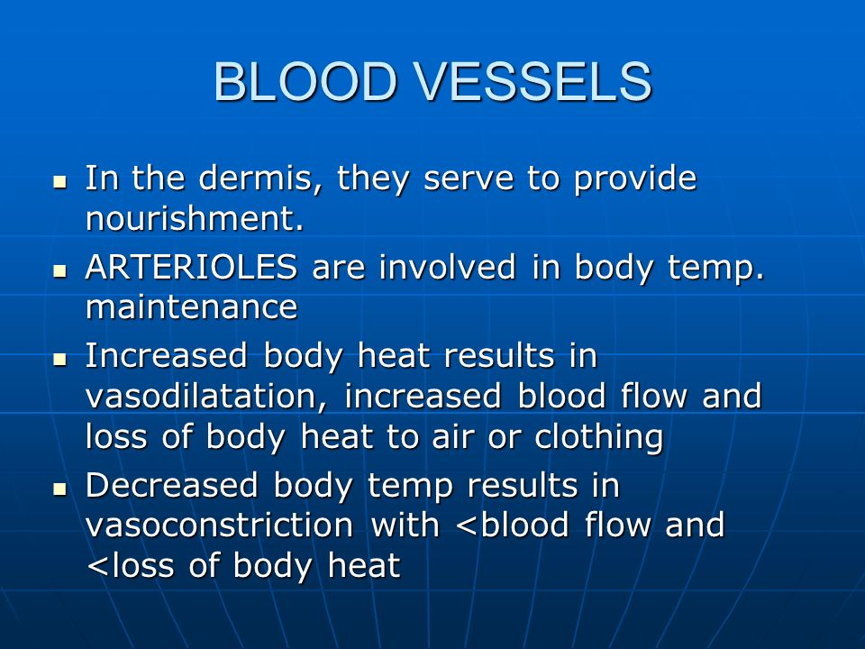 BLOOD VESSELS In the dermis, they serve to provide nourishment.