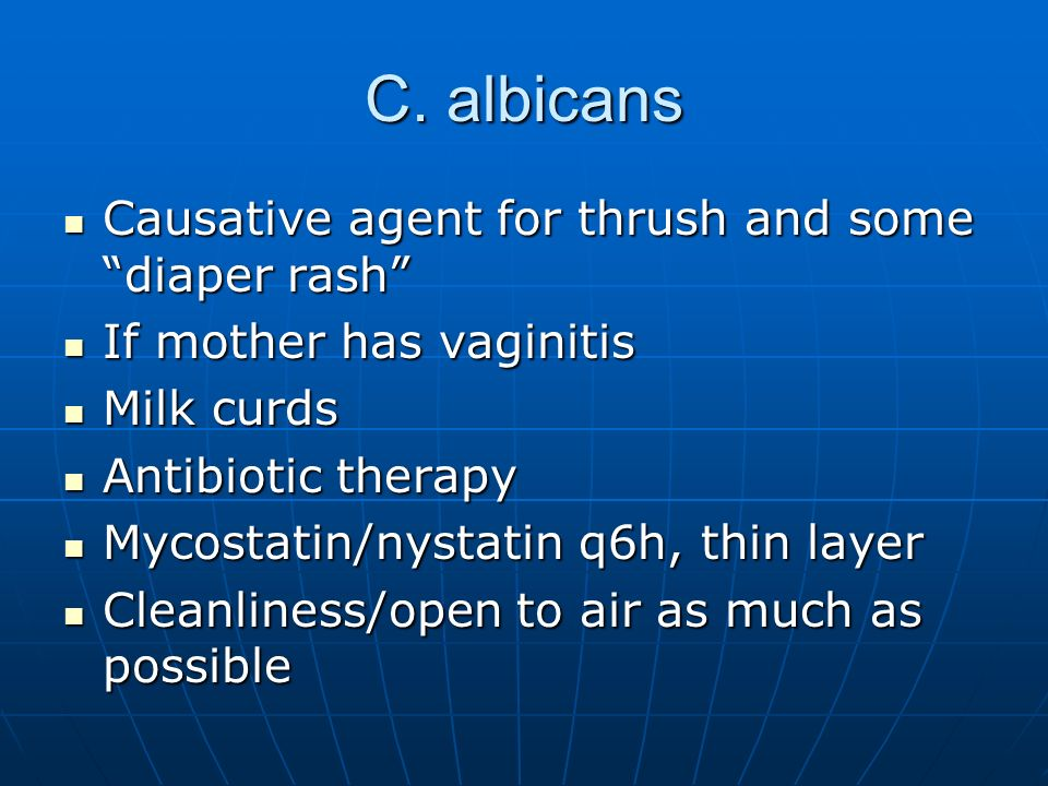 C. albicans Causative agent for thrush and some diaper rash