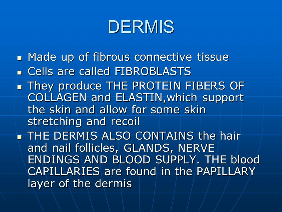 DERMIS Made up of fibrous connective tissue