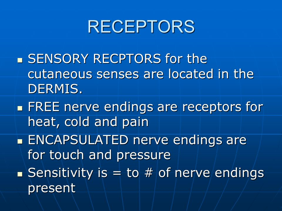 RECEPTORS SENSORY RECPTORS for the cutaneous senses are located in the DERMIS. FREE nerve endings are receptors for heat, cold and pain.