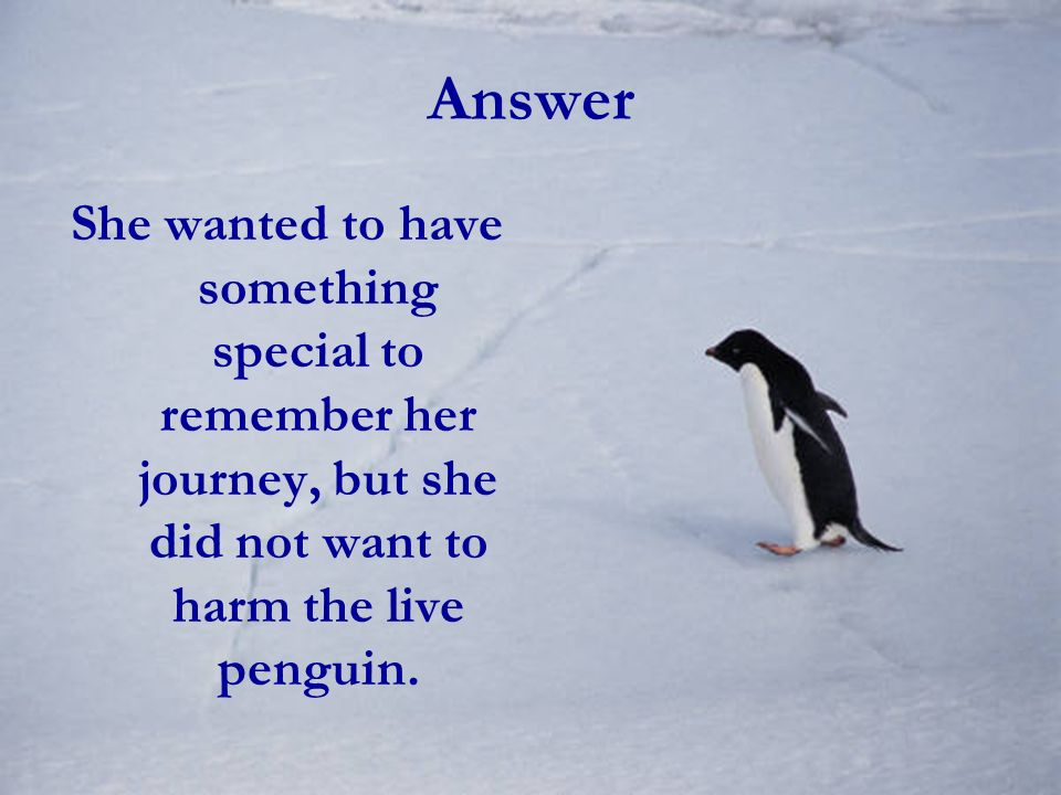 Answer She wanted to have something special to remember her journey, but she did not want to harm the live penguin.