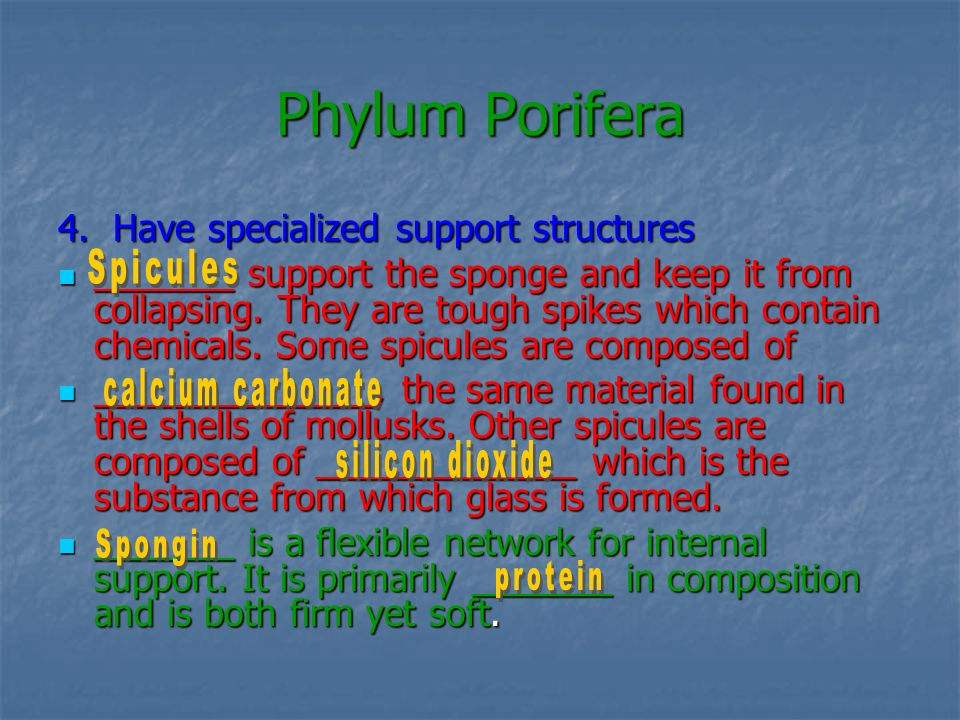 Phylum Porifera 4. Have specialized support structures