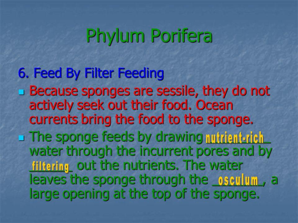 Phylum Porifera 6. Feed By Filter Feeding