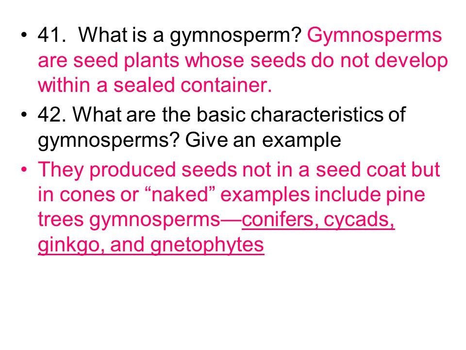 41. What is a gymnosperm Gymnosperms are seed plants whose seeds do not develop within a sealed container.
