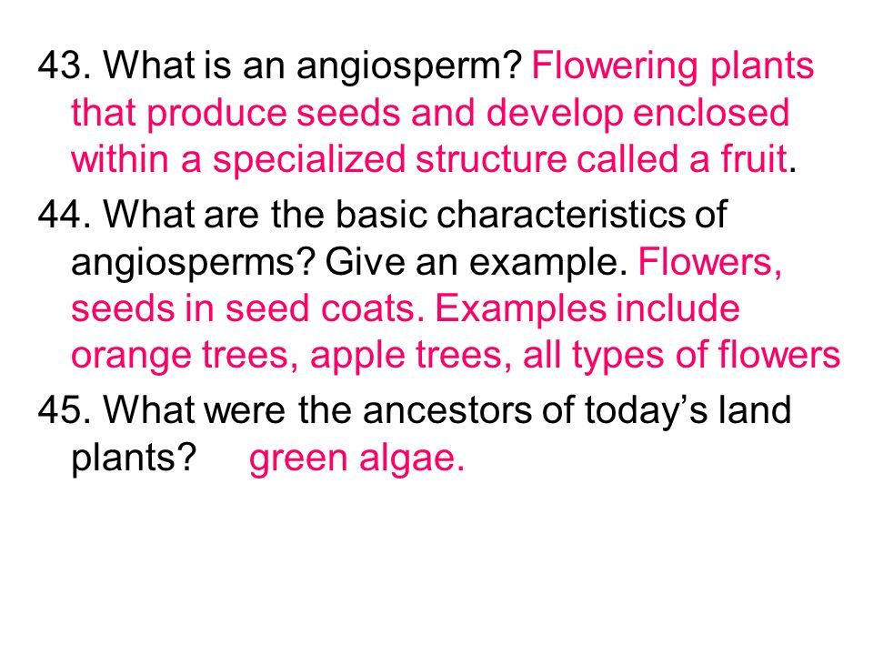 43. What is an angiosperm Flowering plants that produce seeds and develop enclosed within a specialized structure called a fruit.