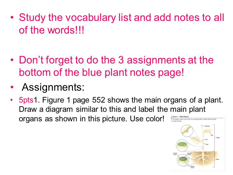 Study the vocabulary list and add notes to all of the words!!!
