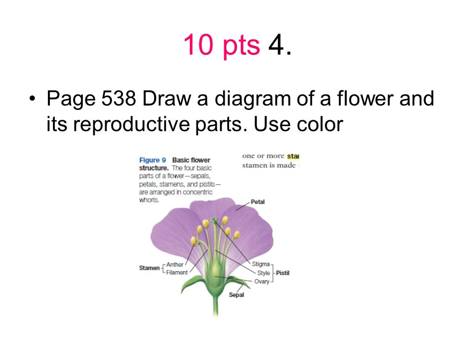 10 pts 4. Page 538 Draw a diagram of a flower and its reproductive parts. Use color