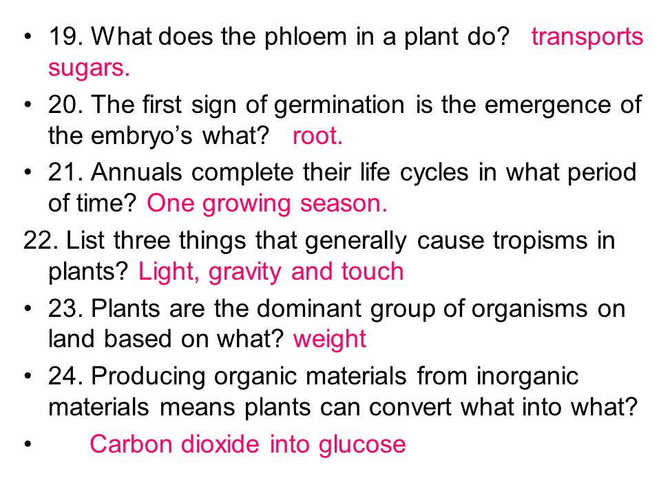 19. What does the phloem in a plant do transports sugars.