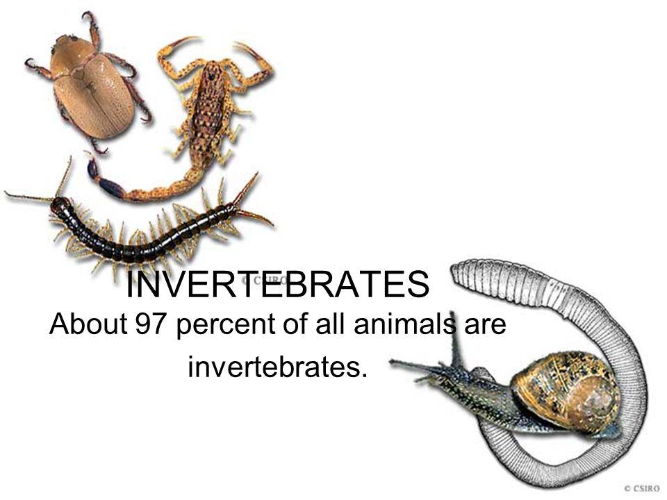 INVERTEBRATES About 97 percent of all animals are invertebrates.