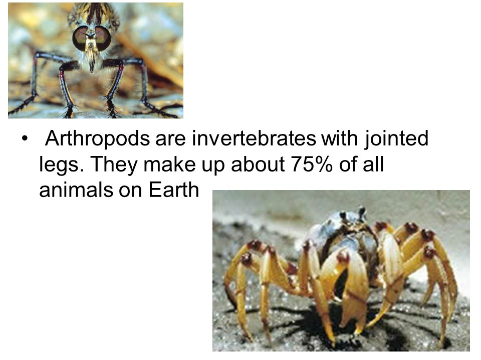 Arthropods are invertebrates with jointed legs