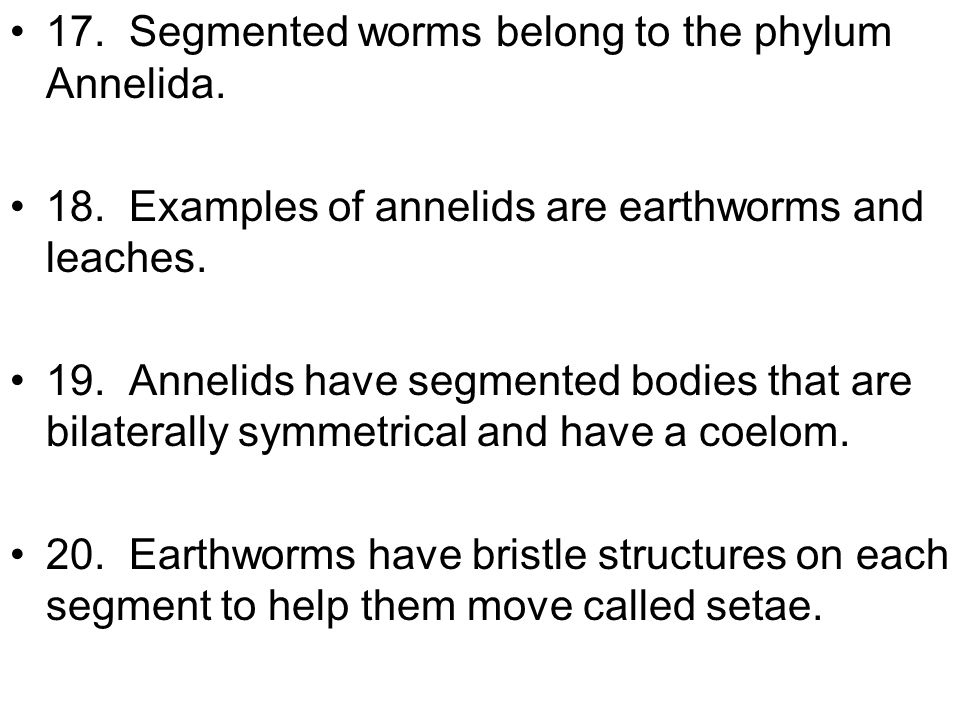 17. Segmented worms belong to the phylum Annelida.