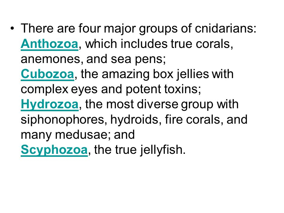 There are four major groups of cnidarians: Anthozoa, which includes true corals, anemones, and sea pens; Cubozoa, the amazing box jellies with complex eyes and potent toxins; Hydrozoa, the most diverse group with siphonophores, hydroids, fire corals, and many medusae; and Scyphozoa, the true jellyfish.