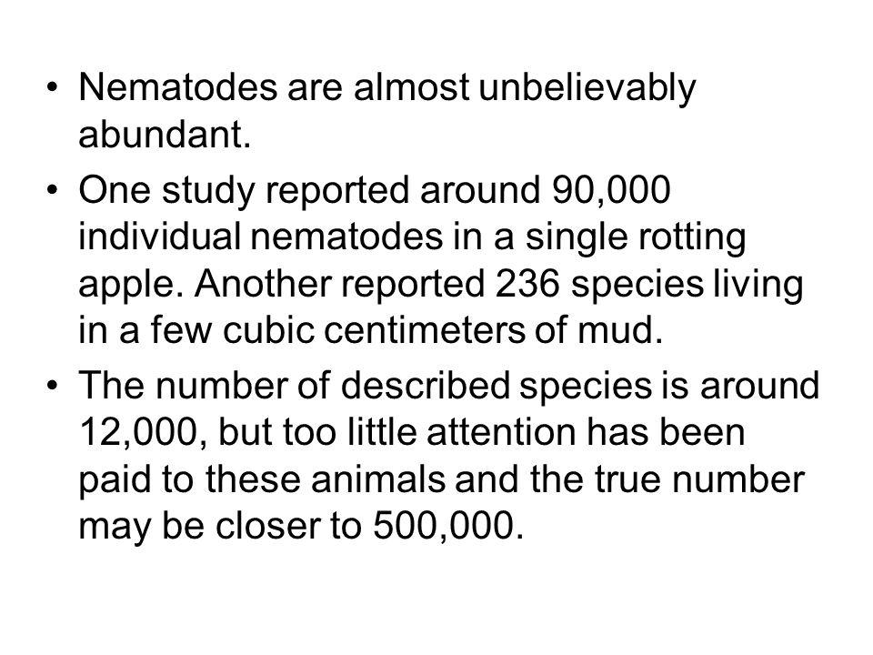 Nematodes are almost unbelievably abundant.