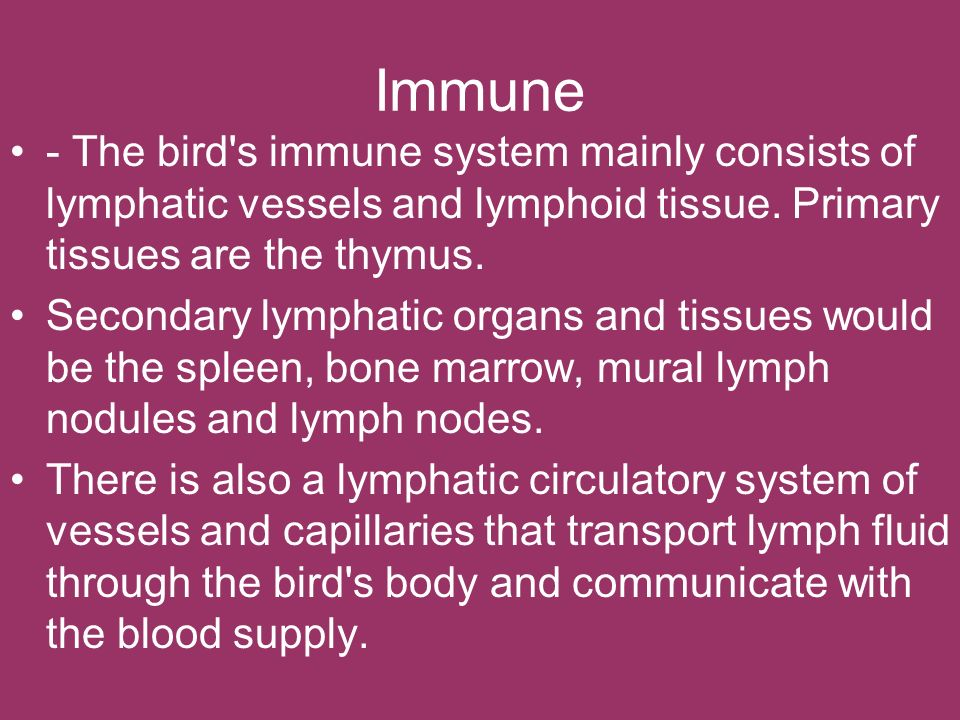 Immune- The bird s immune system mainly consists of lymphatic vessels and lymphoid tissue. Primary tissues are the thymus.