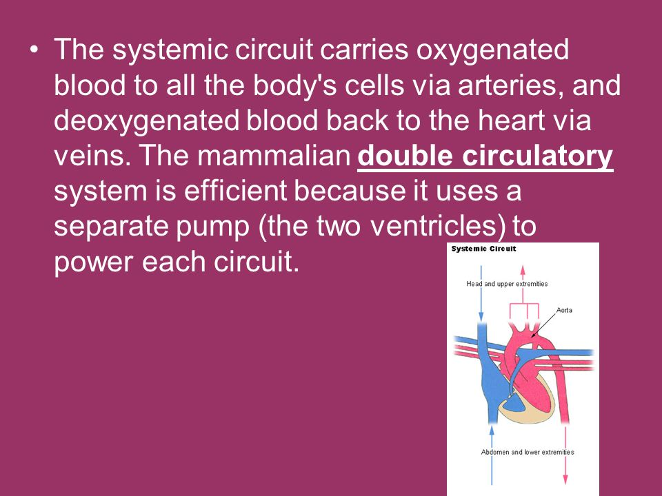 The systemic circuit carries oxygenated blood to all the body s cells via arteries, and deoxygenated blood back to the heart via veins.