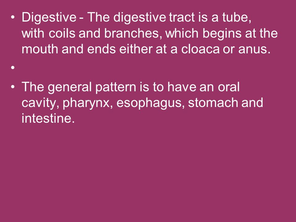 Digestive - The digestive tract is a tube, with coils and branches, which begins at the mouth and ends either at a cloaca or anus.