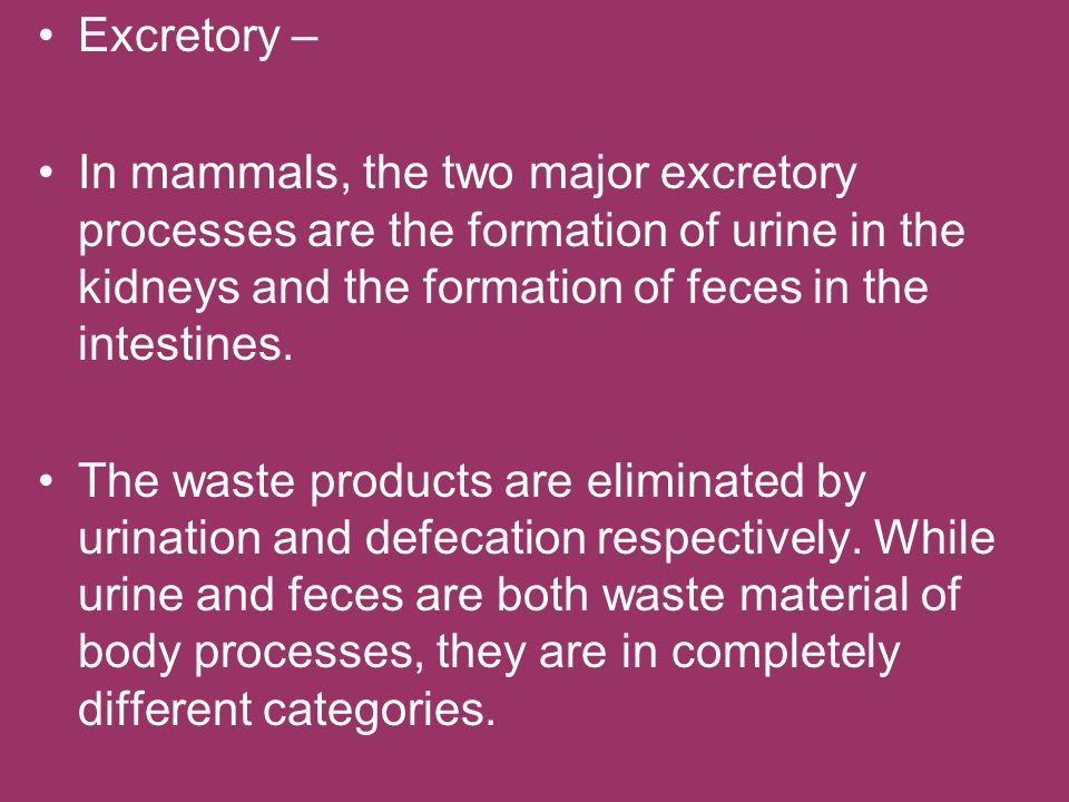 Excretory – In mammals, the two major excretory processes are the formation of urine in the kidneys and the formation of feces in the intestines.