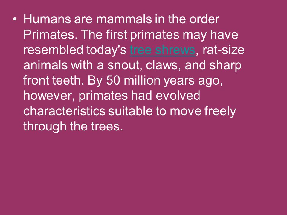 Humans are mammals in the order Primates
