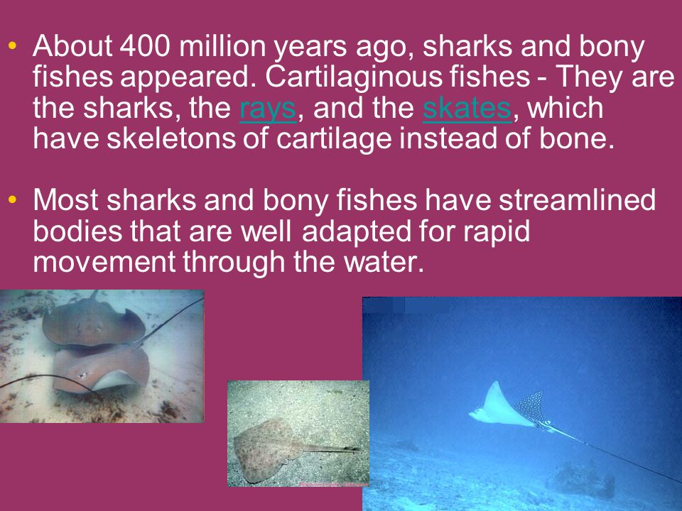 About 400 million years ago, sharks and bony fishes appeared