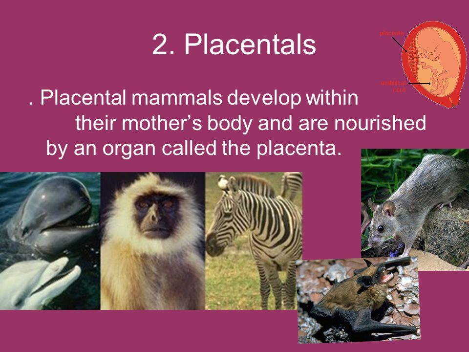 2.Placentals.
