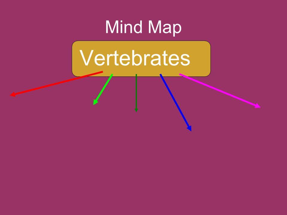 Mind Map Vertebrates