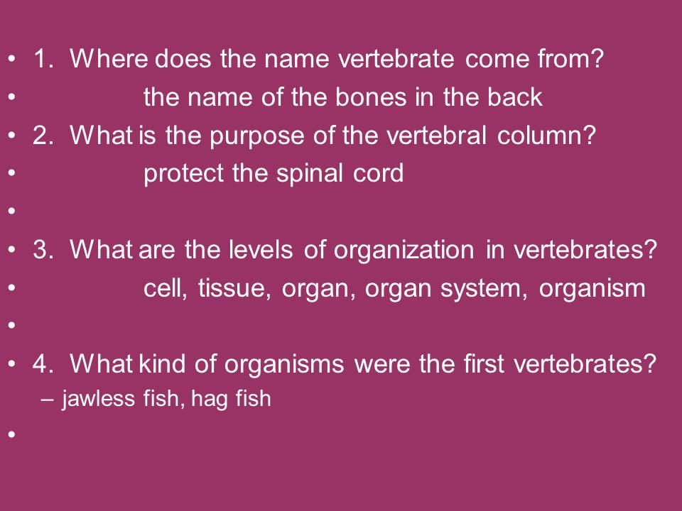 1. Where does the name vertebrate come from