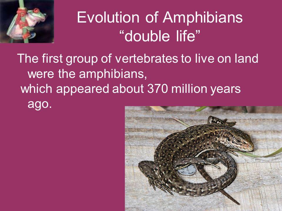 Evolution of Amphibians double life