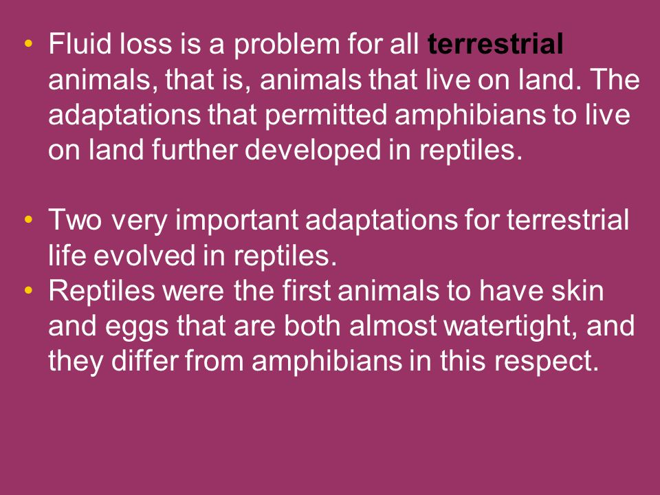 Fluid loss is a problem for all terrestrial animals, that is, animals that live on land. The adaptations that permitted amphibians to live on land further developed in reptiles.