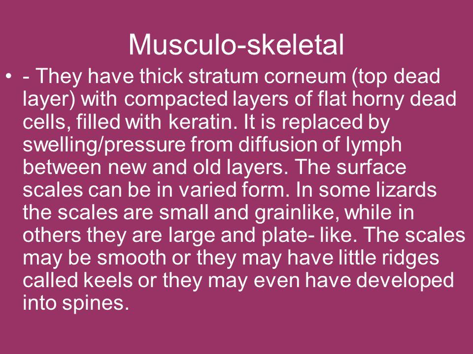 Musculo-skeletal
