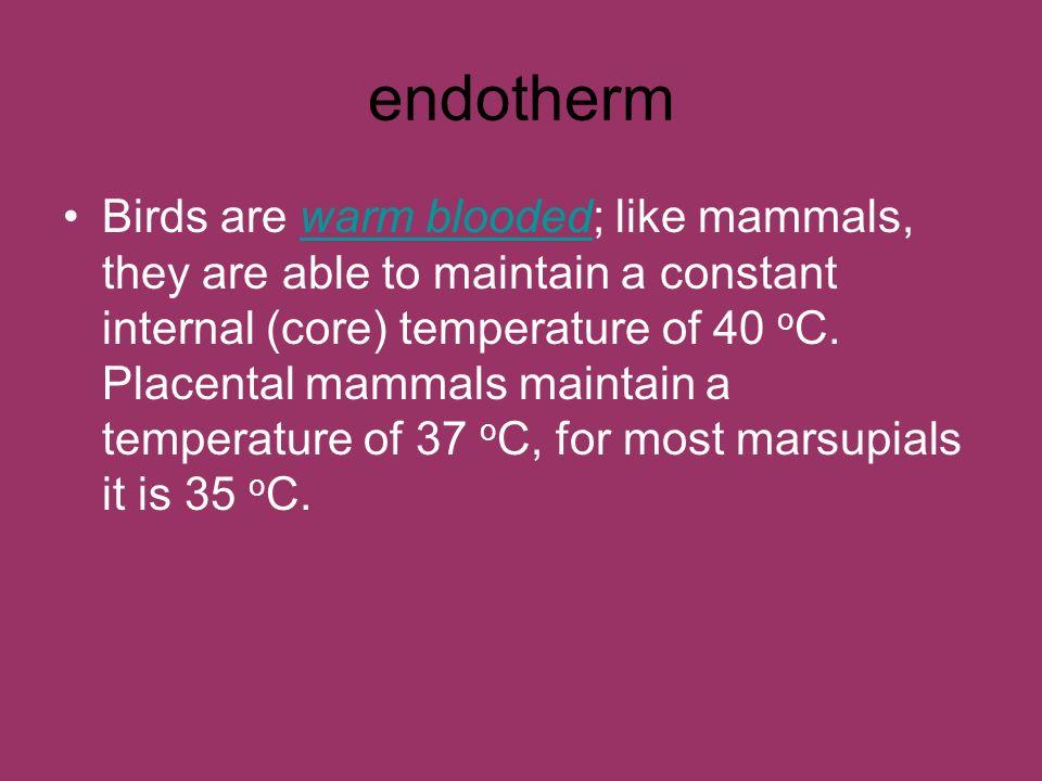 endotherm