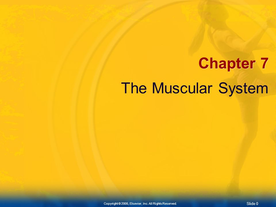 Chapter 7 The Muscular System