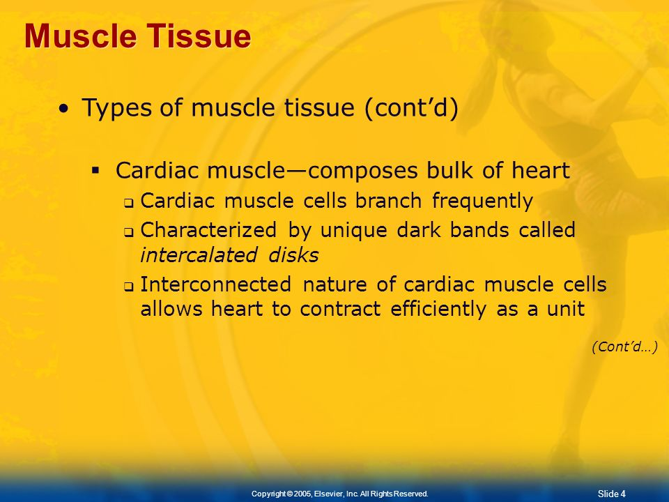 Muscle Tissue Types of muscle tissue (cont'd)