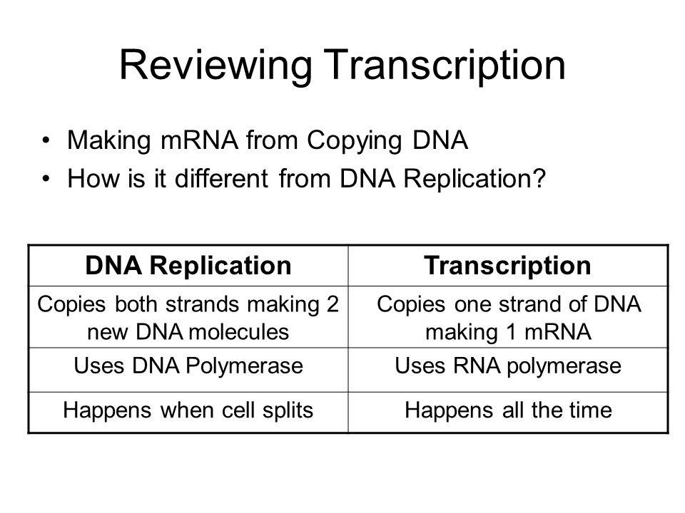 Reviewing Transcription