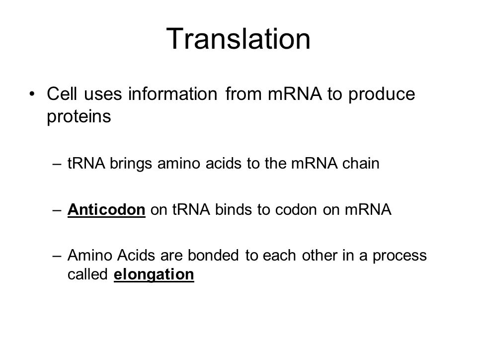 Translation Cell uses information from mRNA to produce proteins