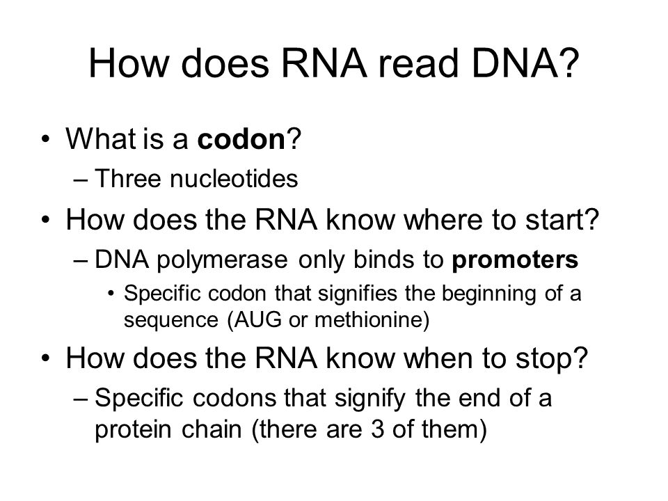 How does RNA read DNA What is a codon