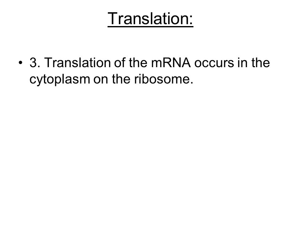 Translation: 3. Translation of the mRNA occurs in the cytoplasm on the ribosome.