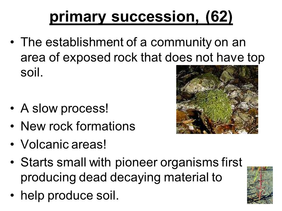 primary succession, (62) The establishment of a community on an area of exposed rock that does not have top soil.
