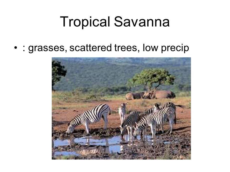 Tropical Savanna : grasses, scattered trees, low precip