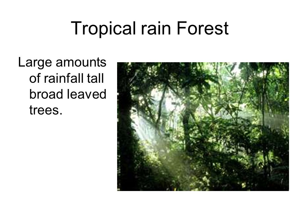 Tropical rain Forest Large amounts of rainfall tall broad leaved trees.