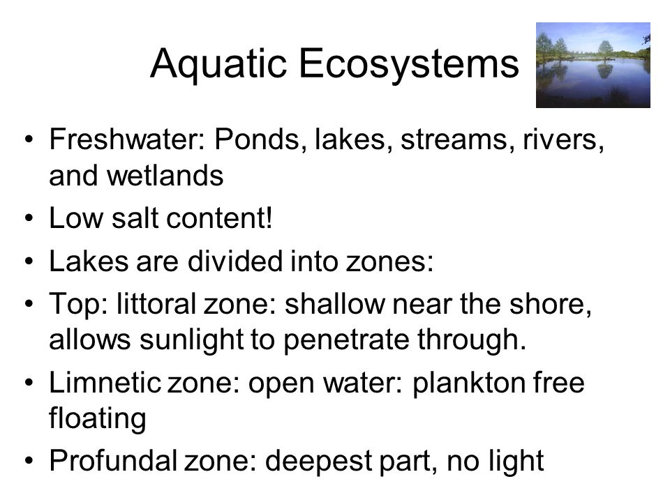 Aquatic Ecosystems Freshwater: Ponds, lakes, streams, rivers, and wetlands. Low salt content! Lakes are divided into zones: